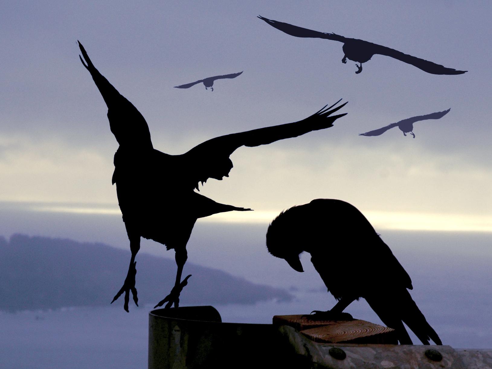 crow.jpg#asset:7635